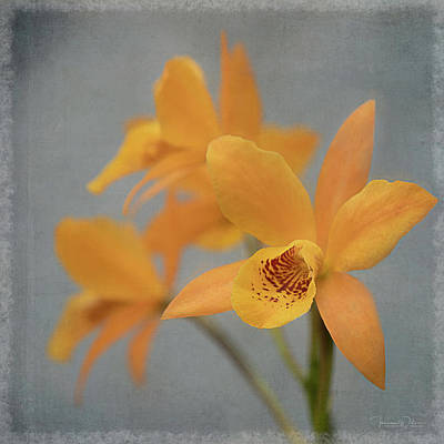 Photograph - Orange Cattleya Orchids By Tl Wilson Photography by Teresa Wilson