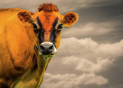 Photograph - Orange Cow by Bob Orsillo
