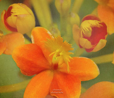 Photograph - Orange Orchid by Silvia Marcoschamer