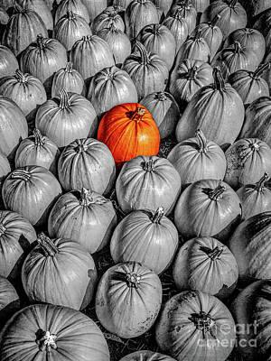 Photograph - Orange Pumpkin by Phil Perkins