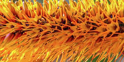 Photograph - Orange Stamens by Mark Shoolery
