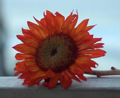 Anne Geddes - Orange Sunflower 3 by Cathy Lindsey