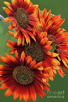 Typography Tees - Orange Sunflower Group Portrait by Regina Geoghan