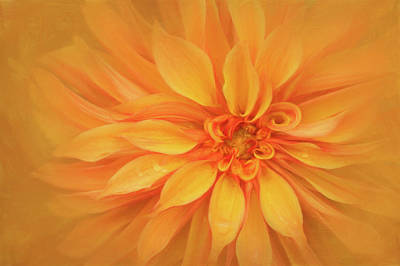 Wall Art - Photograph - Orange Swirl by Stacy Honda