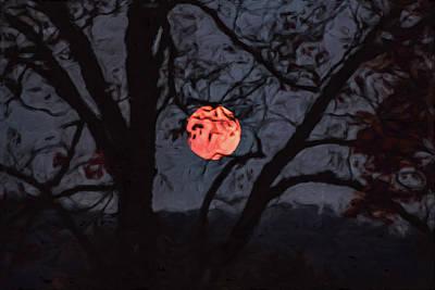 Photograph - Orange Tree by Davin McLaird