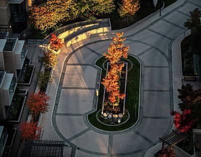 Photograph - Orange Trees In Autumn by Juan Contreras