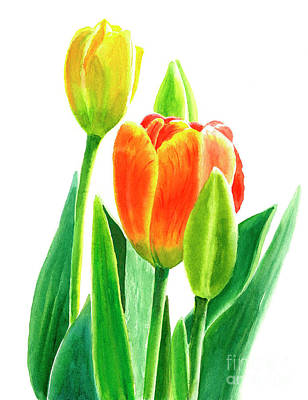 Tulips Watercolor Wall Art - Painting - Orange Tulip With Buds by Sharon Freeman