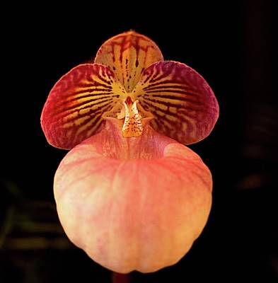 Photograph - Orchid 10a by Charles HALL