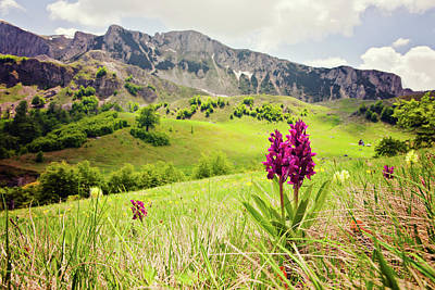 Photograph - Orchid Against Rolling Hills And by Vpopovic