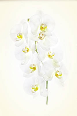 Photograph - Orchid Display by Usha Peddamatham