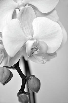Photograph - Orchid Flower In Black And White by Angie Tirado