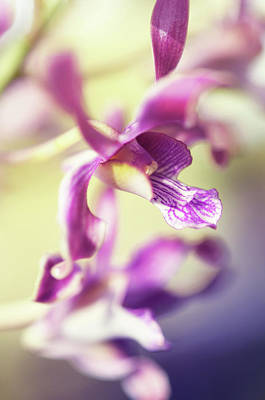 Photograph - Orchid Grace by Jenny Rainbow