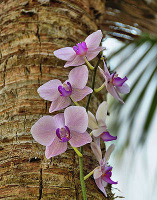 Photograph - Orchid by JAMART Photography