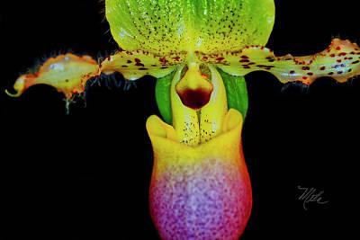 Photograph - Orchid Study Eleven by Meta Gatschenberger