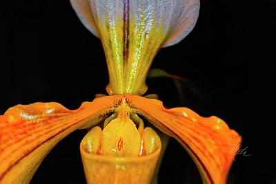 Orchid Study Five Art Print
