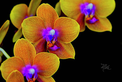 Photograph - Orchid Study Ten by Meta Gatschenberger