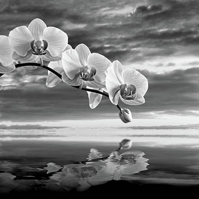 Photograph - Orchid Sunset Reflections Black And White by Gill Billington
