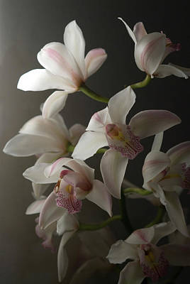 Photograph - Orchids, Close-up by Kate Connell