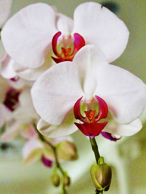 Lucille Ball - Orchids by Diana Matlock