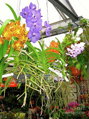 City Scenes - Orchids in Norway, on Display by Phyllis Kaltenbach
