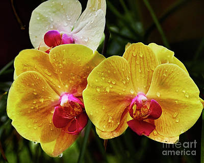 Photograph - Orchids In The Rain  by Steve Ondrus