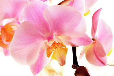 Photograph - Orchids In Watercolor by Angie Tirado