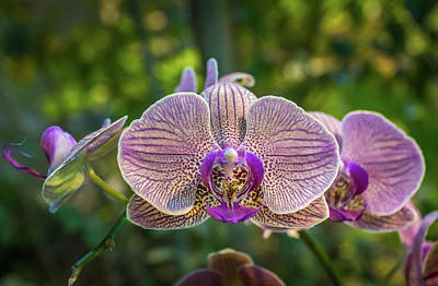 Photograph - Orchids Up Close by Bill Pevlor
