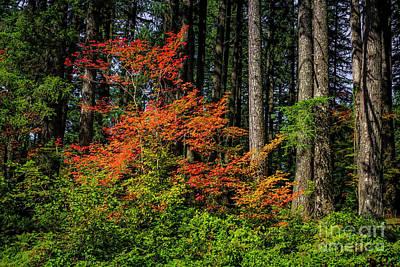 Photograph - Oregon Autumn by Jon Burch Photography