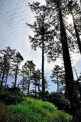 Photograph - Oregon Coast Forest by Jerry Sodorff
