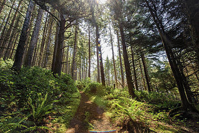 Photograph - Oregon Coast Trail by Cathy Neth