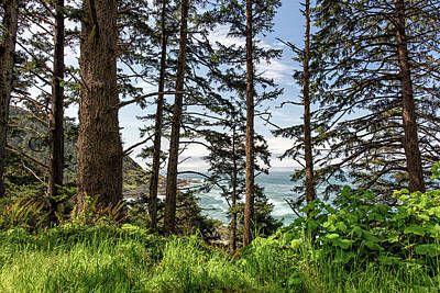 Photograph - Oregon Coastline Through The Pine Trees by Cathy Neth