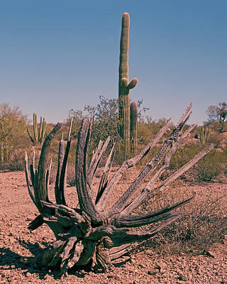 Photograph - Organ Pipe Skeleton by Tom Daniel
