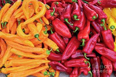 Photograph - Organic Peppers by Tim Gainey