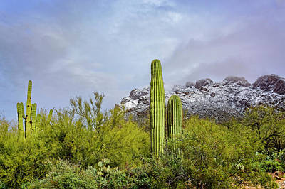 Photograph - Oro Valley Winter H19552 by Mark Myhaver