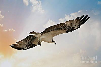 Photograph - Osprey Sky by Carol Groenen