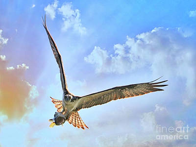 Photograph - Osprey With Fish Head On by Carol Groenen