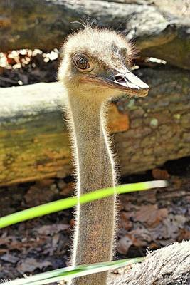 Photograph - Ostrich by Lisa Wooten