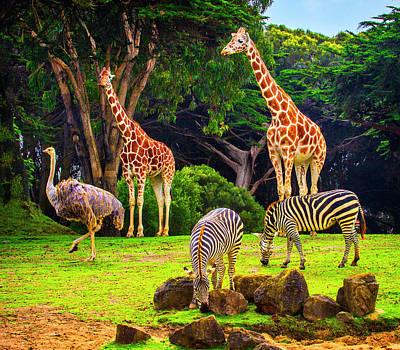 Photograph - Ostrich Zebras And Giraffe by Garry Gay