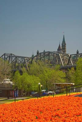Gatineau Park Wall Art - Photograph - Ottawa Tulip Festival by Dennis Mccoleman