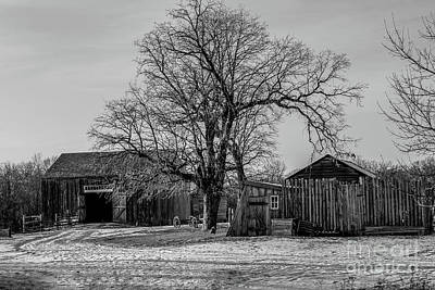 Out In The Barn Yard Art Print