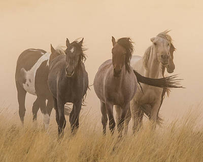 Photograph - Out Of The Dust by Mary Hone
