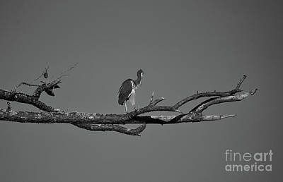 Photograph - Out On A Limb Bnw by Skip Willits