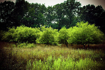 Photograph - Overgrown by Michelle Wermuth