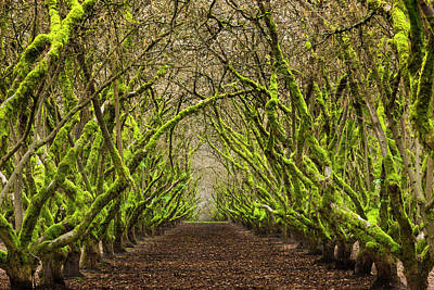 Photograph - Overgrown Orchard In Oregon, Usa by Mint Images - Art Wolfe