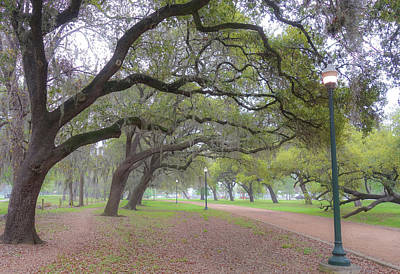 Photograph - Overhanging Oaks In Hermann Park by Dan Sproul