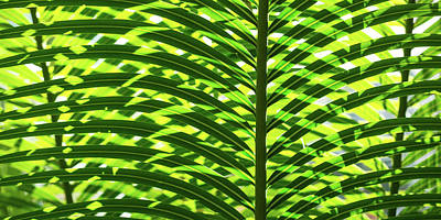 Photograph - Overlapping Palms by Mark Shoolery
