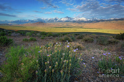 Photograph - Owens Valley Overlook  by Michael Ver Sprill