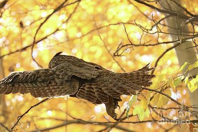 Photograph - Owl Escape by Carol Groenen