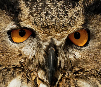 Photograph - Owl Eyes by A.c.