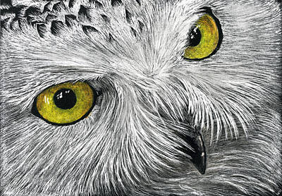 Drawing - Owl Face by William Underwood